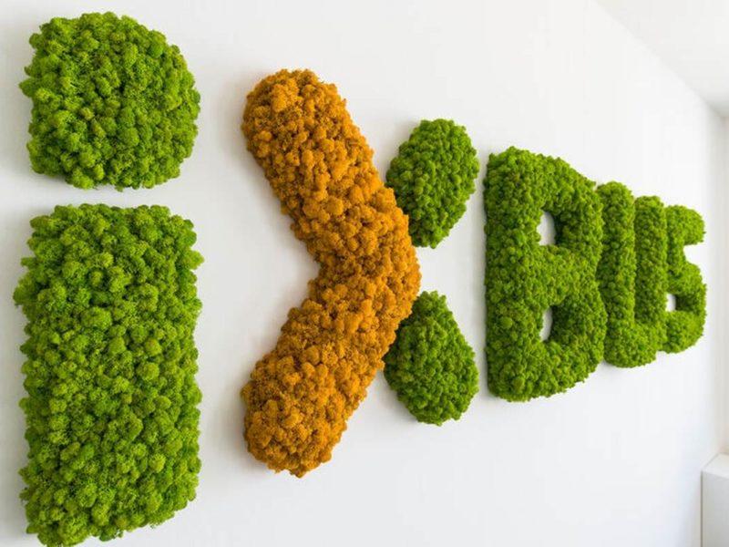 Individual: Islandmoos Logo Buchstaben maigrün und orange