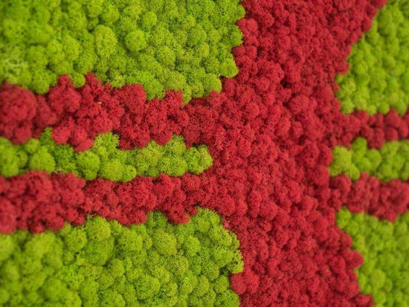 Individual: Islandmoos maigrün und rot
