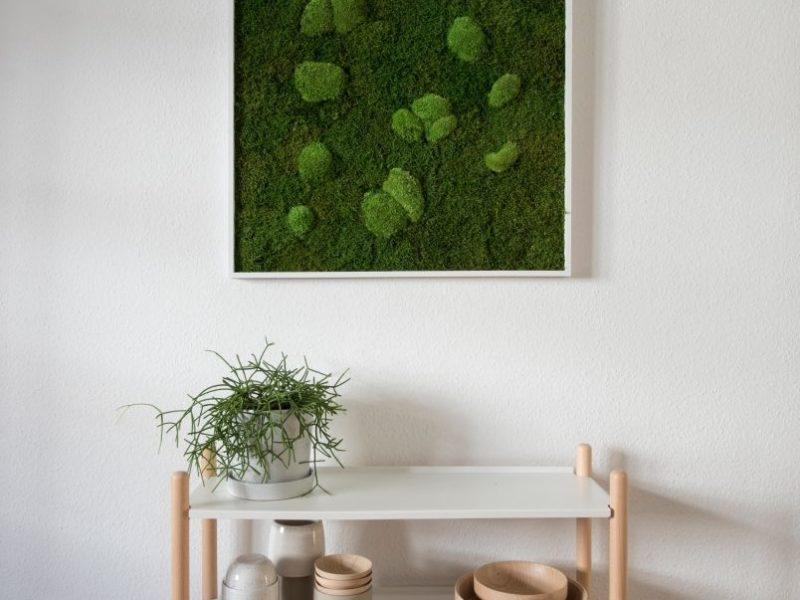 Standard: Wald und Kugelmoos 80x80